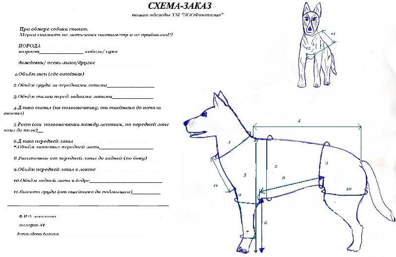 Схема замера собак
